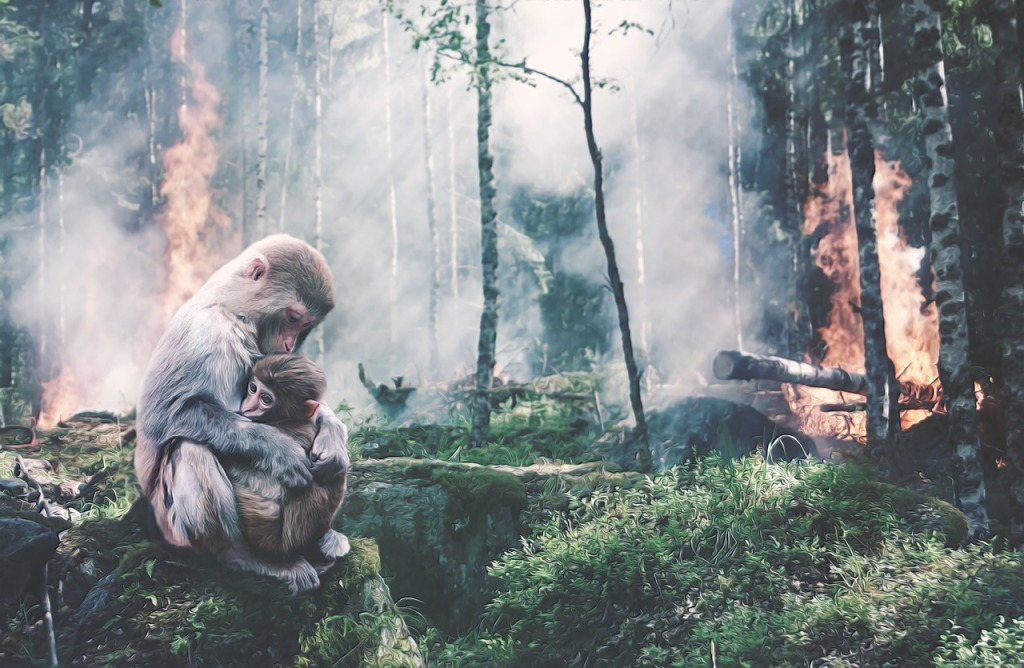 An ape protects their child as their habitat is burned down for human expansion and commerce.